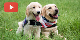 SERVICE DOG TRAINING SITE SETS UP OPERATIONS
