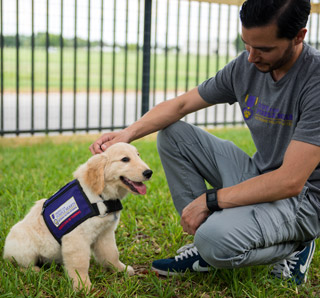Service dogs in training, Paws for purple hearts